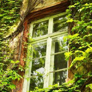 photo détail d'une fenêtre ancienne sur façade de maison recouverte de lierre, vitrerie, petits travaux de bricolage, Bel'Age Services de Proximité, livraison de repas à domicile, services à domicile, Grenoble